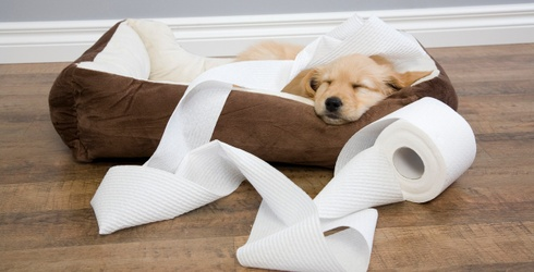 7 Videos of Snoozing Puppies Because THEY ARE SO CUTE