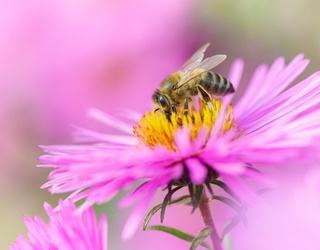How Much Do You Know About Honey Bees? We're Buzzing to Find Out