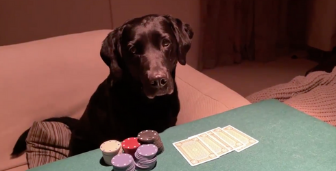 Tweets of the Week: What It's Like to Play Poker With Your Dogs