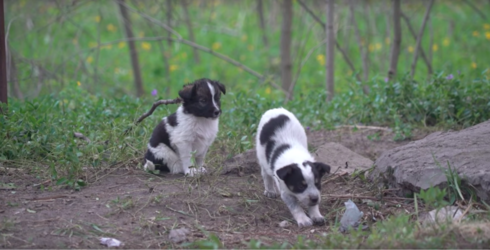 The Radioactive Puppies of Chernobyl Are Equal Parts Precious and Deadly