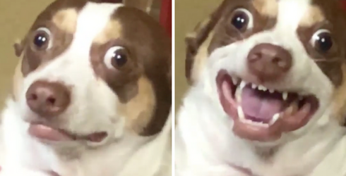 Mr. Bubz Might Be a Demon Trapped in a Tiny Dog's Body