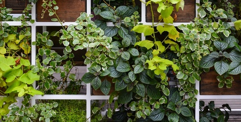 What's Climbing Your Trellis? We've Got Leafy Greens on Our Puzzle Version