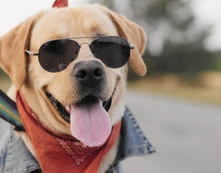 Get Tails Wagging With These Summer Styles for Your Furry Friend
