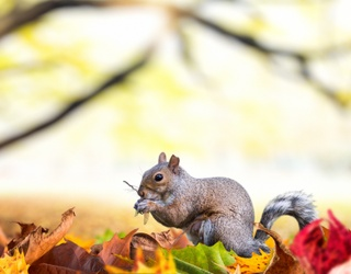 Monday Memory Madness: Easy, Breezy, Beautiful Cover Squirrel