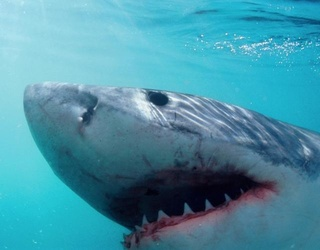 Great White Shark Jumps Into Fishing Boat, Fisherman Acts Like It's NBD