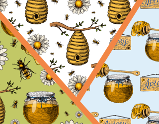 Oh Honey! Can You Find the Differences in These Honey Bee Photos?