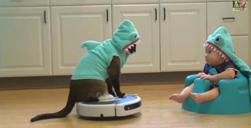 It's Official, a Cat Riding a Roomba Is the Most Purrfect Thing We've Ever Seen