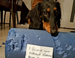 15 Pet-Shaming Instagram Posts That Perfectly Sum up the Trials and Tribulations of Having a Pet