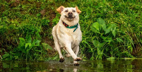 Laugh Along With the Winners of the Comedy Pet Photography Awards in This Memory Match