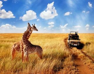 Weekend Wanderlust: Take a Walk on the Wild Side During an African Safari
