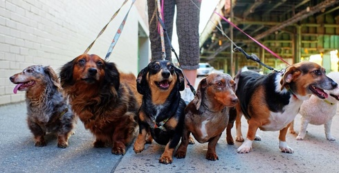 Try Not to Cry Tears of Joy While Completing This Wiener Dog Memory Match