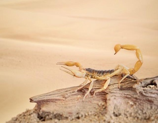 Scorpion Stings Man on United Airlines Flight Bound for Calgary, Which is Just Their Luck
