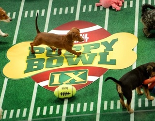 There Are No Winners or Losers Here, Just Lots of Puppies Playing Football