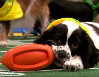 Eight Reasons Why the Puppy Bowl Is Actually Way Better Than the Super Bowl