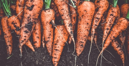 Piece Together This Home-Grown Carrots Puzzle!