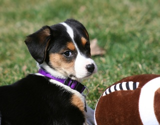 We're All About Puppies, Football and Puzzles on Saturdays