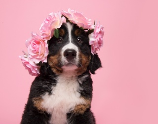 Wish You Were at Coachella? These Flower-Crowned Dogs Can Probably Help