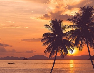 Find the Differences in These Relaxing Palm Tree Photos