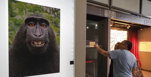 That Monkey Selfie Lawsuit Finally Ended, but Now a Movie is in the Works