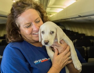 Southwest Airlines Flies 64 Orphaned Animals From Hurricane-Ravaged Houston to San Diego