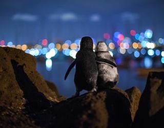 """""""Lovebird"""" Penguins Caught in Award-Winning Photograph Comfort Each Other"""