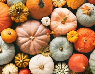 Which Gourd-geous Pumpkin Should You Buy?