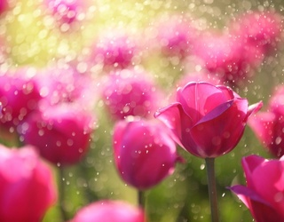 Dewy Think You Can Unscramble This Tulip Puzzle? Perhaps...