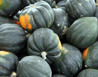 Is Your Head Hollow if You Can't Unscramble This Acorn Squash Puzzle? Maybe...