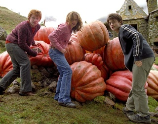 """Is Autumn Really """"Harry Potter"""" Season or Are We Just Creatures of Habit?"""