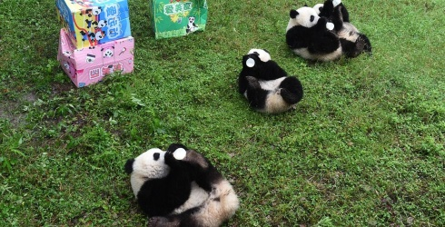 Break out the Bottles for This Panda Birthday Puzzle!