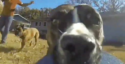 In This Week's Best Tweets, We See That Giving Your Dog a GoPro May Not Be the Worst Idea