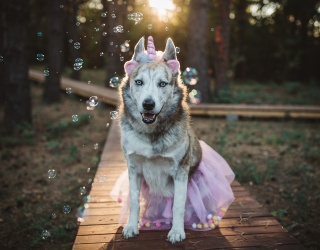 Help Us Sprinkle Some Magic on Today and Unscramble This Unicorn Doggo Puzzle