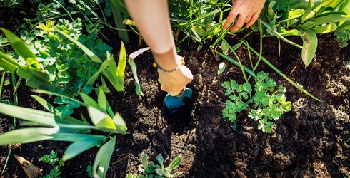 How to Start Your Own Veggie Garden