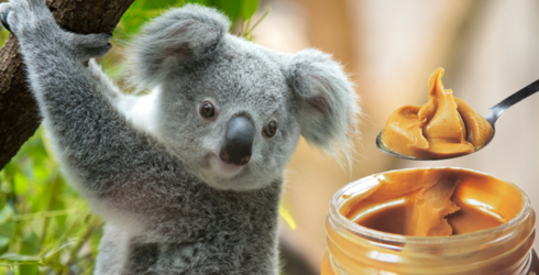 Answer These Very Scientific Questions About Peanut Butter & We'll Tell You Which Koala You Are
