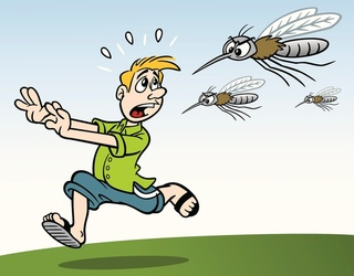 Mosquitos: How Much Do You Know About Summer's Most Annoying Bug?