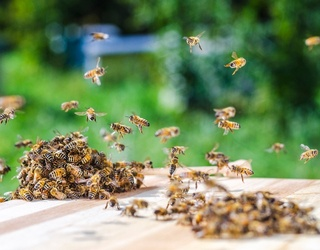 At-Home Hacks for Quick Relief From Bee Stings