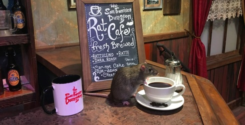 You Can Now Spend Your Hard Earned Cash at a Cafe Surrounded by Rats